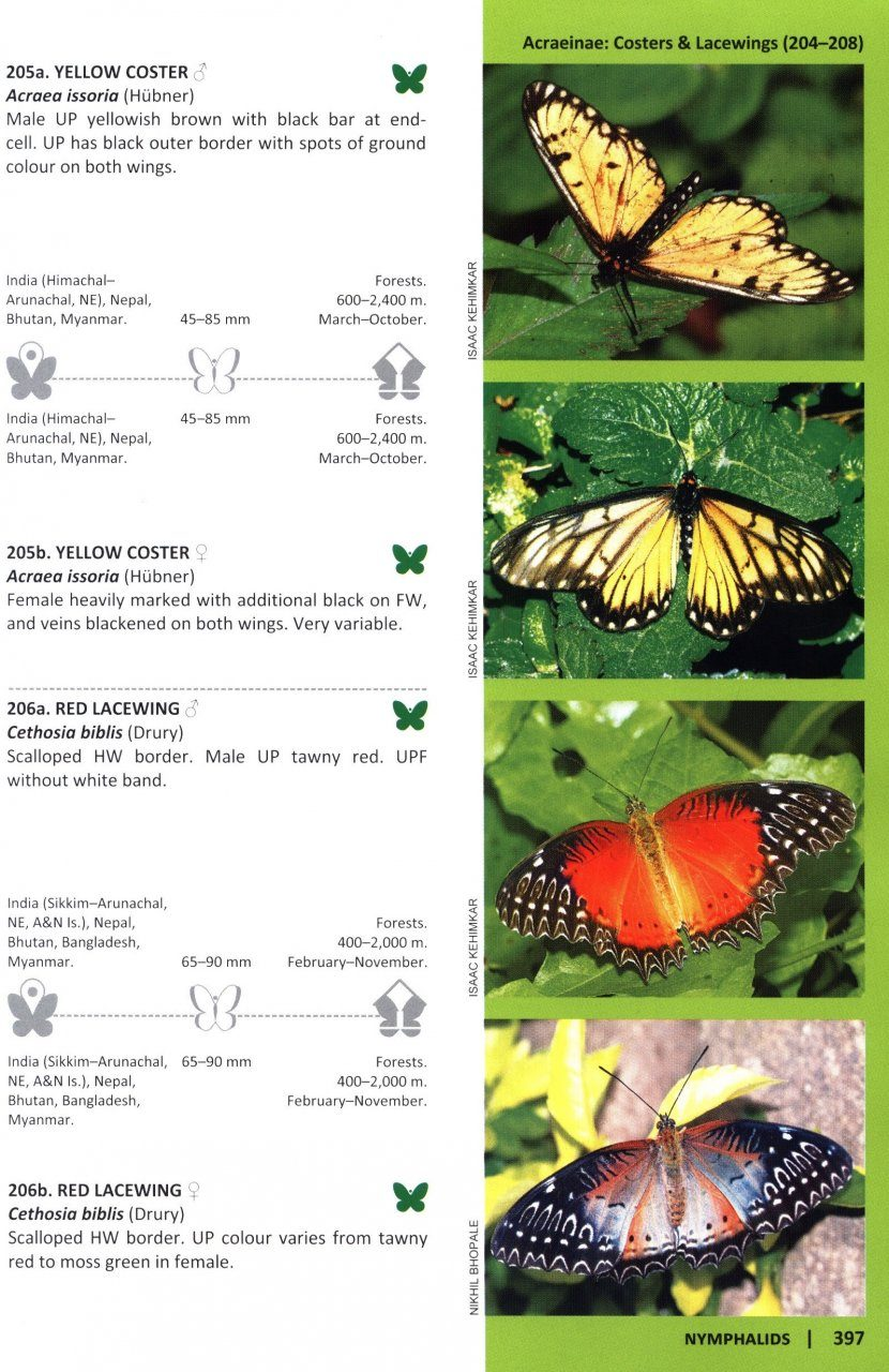 butterflies of india bnhs field guides