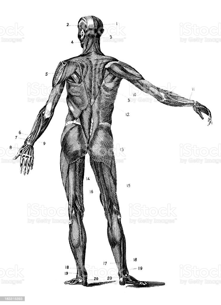 drawing the human body an anatomical guide