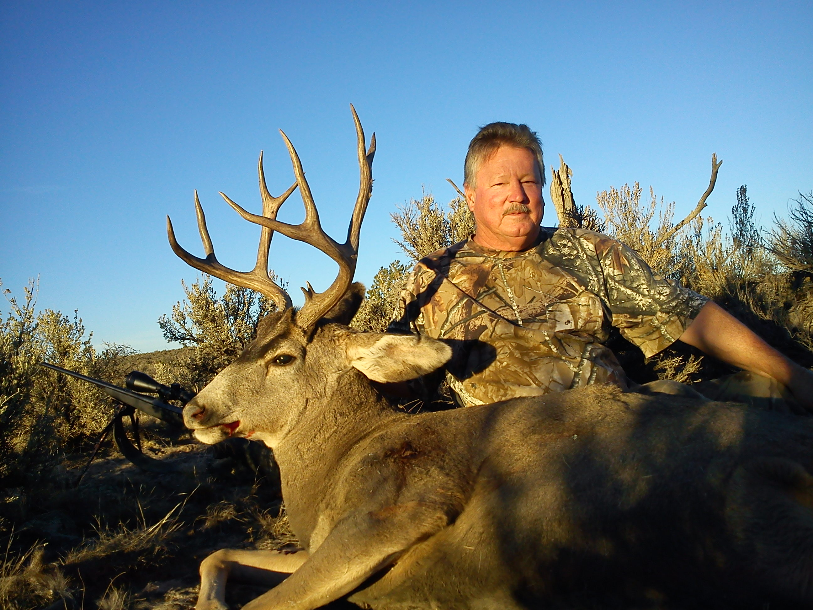 guided elk hunts in new mexico
