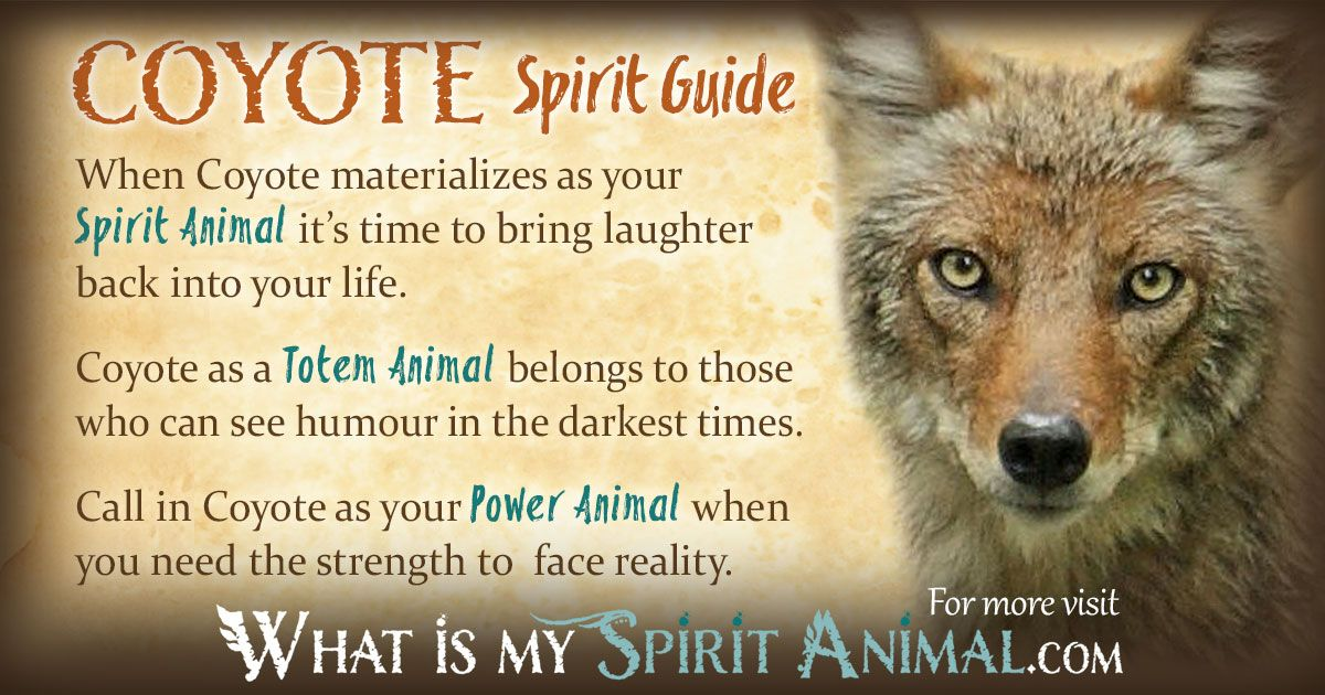 what is my spirit animal guide quiz